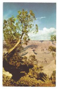 Grand Canyon Yavapai Point Fred Harvey Chrome Arizona AZ