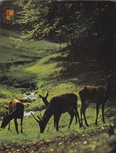 Postal 62056 : Valls d Andorra. Isards