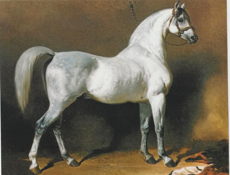 Grey Arabian Stallion Postcard Horse Beautiful Alfred de Dreux