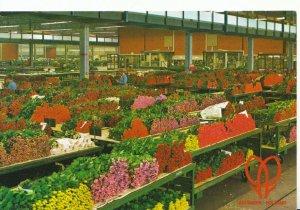 Netherlands Postcard - Holland - Aalsmeer - World Flower Centre - Ref 3562A
