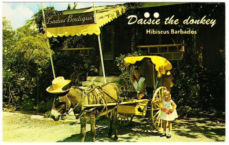 Barbados Hibiscus Daisie the Donkey at Ladies Boutique Store 1970s Postcard
