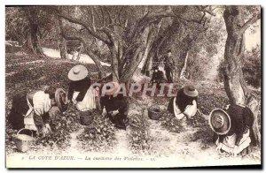 Old Postcard The Cote d & # 39Azur Picking Violets