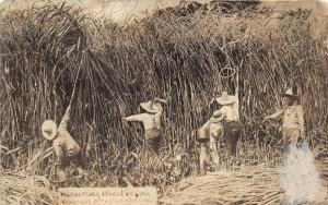 Iowa~Farmers Harvesting (Lassoing) Exaggerated Wheat~1909 Martin RPPC~Postcard