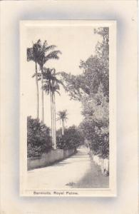 Bermuda Street Scene With Royal Palms