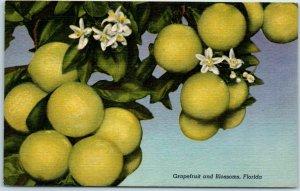 Vintage Florida Postcard Grapefruit & Blossoms Curteich Linen 1B-HH1424 c1940s