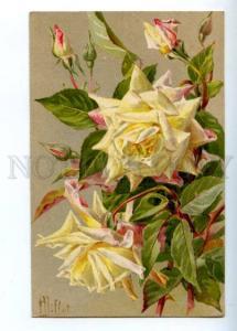 Risultati immagini per rose maria van Houtte