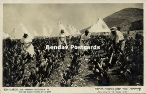 israel, EIN-HAROD, Tobacco Cultivation at the Kibbutz (1920s) RPPC, Judaica