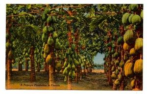 FL - Papaya Plantation