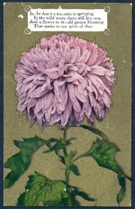 Lavender Chrysanthemum w/poetry used c1908
