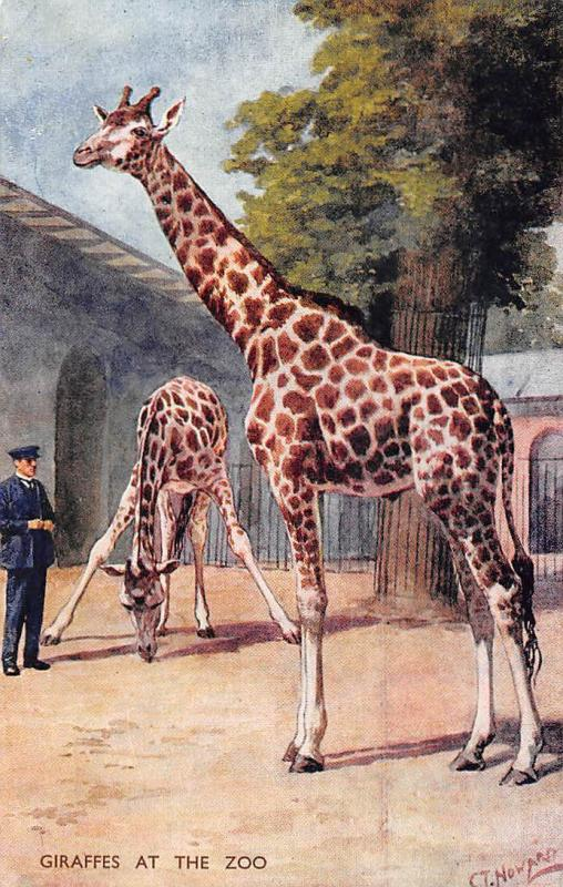 Zoological Garden, Giraffes at the Zoo C.T. Howard