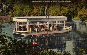 Florida Silver Springs Feeding The Black Bass Curteich