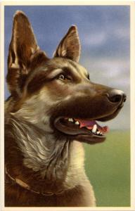 Dog -  German Shepherd