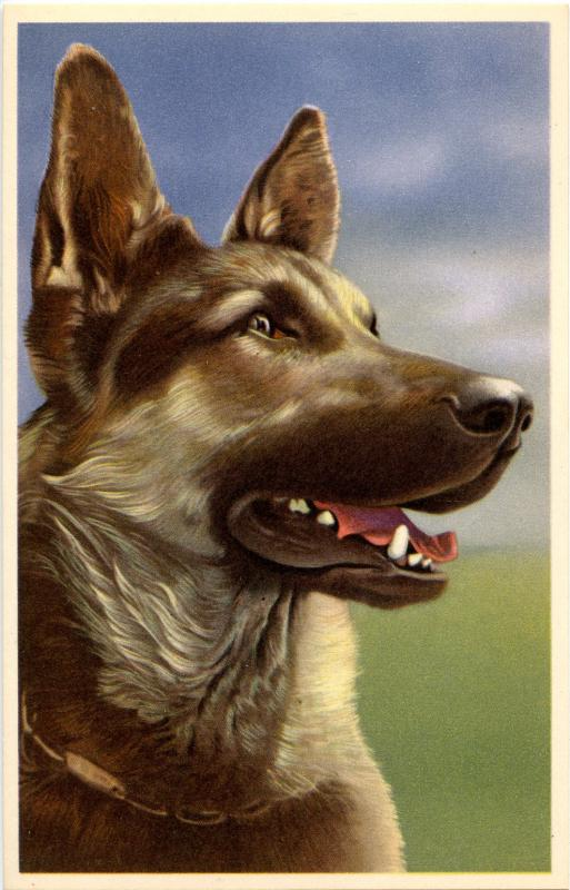 Dog -  German Shepherd