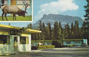 Elk and deer are seen from Bel Plaza Motel,  Banff Avenue,  Banff,   Alberta,...
