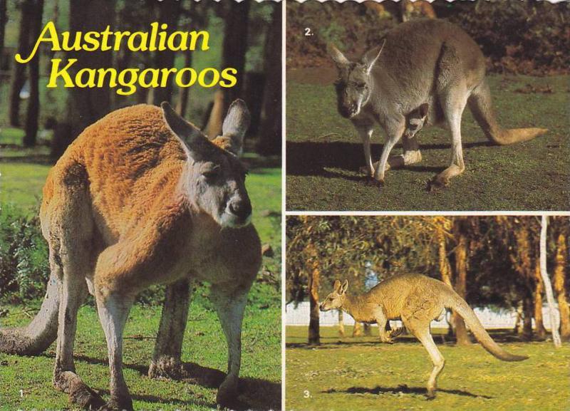 3-views,  Australian Kangaroos,   Australia,   50-70s