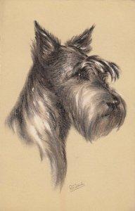 AS: Portrait of Schnauzer Dog, 1900-10s