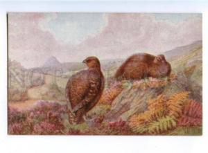 178139 Bird hunting Rankin Partridge TUCK #3314 vintage