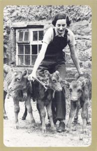 Nostalgia Postcard WW2 Land Girls & Calves, Cornwall c1940 Repro Card NS53