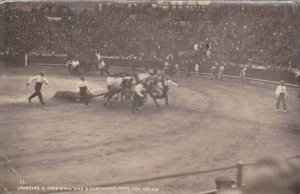 Mexico Dragging A Dead Bull & Dead Horse From The Arena Real Photo
