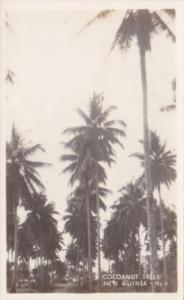 New Guinea Cocoanut Trees Real Photo