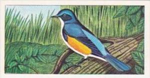 Glengettie Tea Trade Card Rare British Birds No 8 Red-Flanked Bluetail