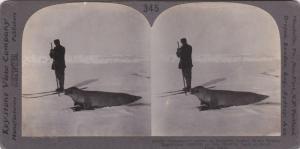 SV: Commander Adrien De Gerlache on skis hunting Seals, South Polar Pack , 00...