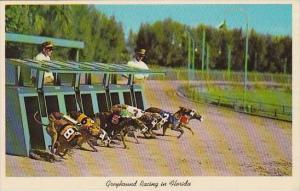 Florida Grayhound Racing In Florida