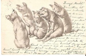 BOL0052 humanized pigs laughing 1903 lithography