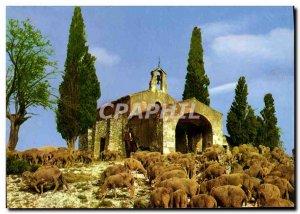 Postcard Modern Provence Pastoral Symphony Lambs Sheep
