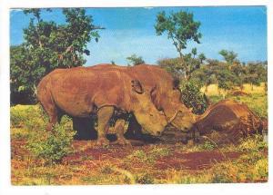 East African Wild Life, Rhino,   PU-1988
