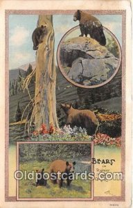 Bear Rainier National Park Stain on back a lot of yellowing from age from and...