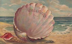 GREETINGS, PU-1908; Giant Sea shell