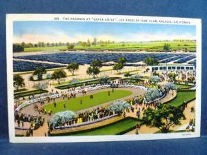 Postcard CA Arcadia  Paddock Santa Anita Horse Race Track Los Angeles Turf Club