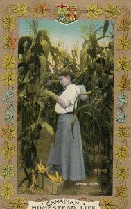 Homestead Life , Canada , 1900-10s ; Picking Corn