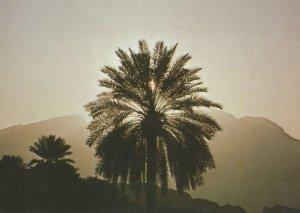 Jabal Sumail Oman Middle East Rare Postcard