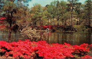 Virginia Norfolk Municipal Gardens Azalea Blossom Time