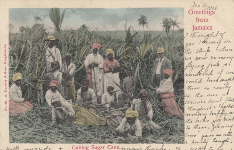 JAMAICA , 1906 ; Cutting Sugar Cane