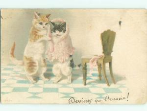foreign 1903 Postcard HUMANIZED KITTEN CATS WEARING SHAWL AC3576