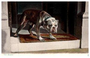 Dog ,  English Bull Dog