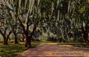 Louisiana New Orleans The Pakenham Oaks Curteich
