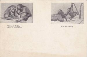 2-Views, Couple of Orangutans, Before the wedding, After the Wedding, 10-20s