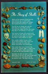 The Story of Shells,Seashells BIN
