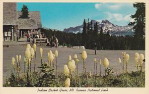 Indian Baskeet Grass, Mt. Rainier National Park, TACOMA, Washington, 1940-1960s