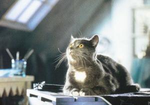 Kitten Cat In German Germany Annexe Outbuilding Playing In Loft Postcard