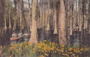 Cypress Gardens Charleston South Carolina