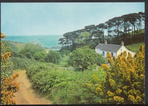 Channel Islands Postcard - Belvoir House, Herm Island  C1165