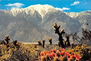 San Jacinto Mountain - California
