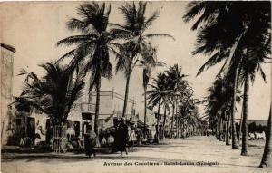 CPA SÉNÉGAL-Saint Louis-Avenue de Cocotier (331301)