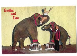 Bertha and Tina Talented Elephant Act Nugget Hotel & Casino Sparks Nevada