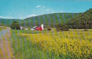 Greetings From The Pennsylvania Dutch Country A Field Of Golden Green